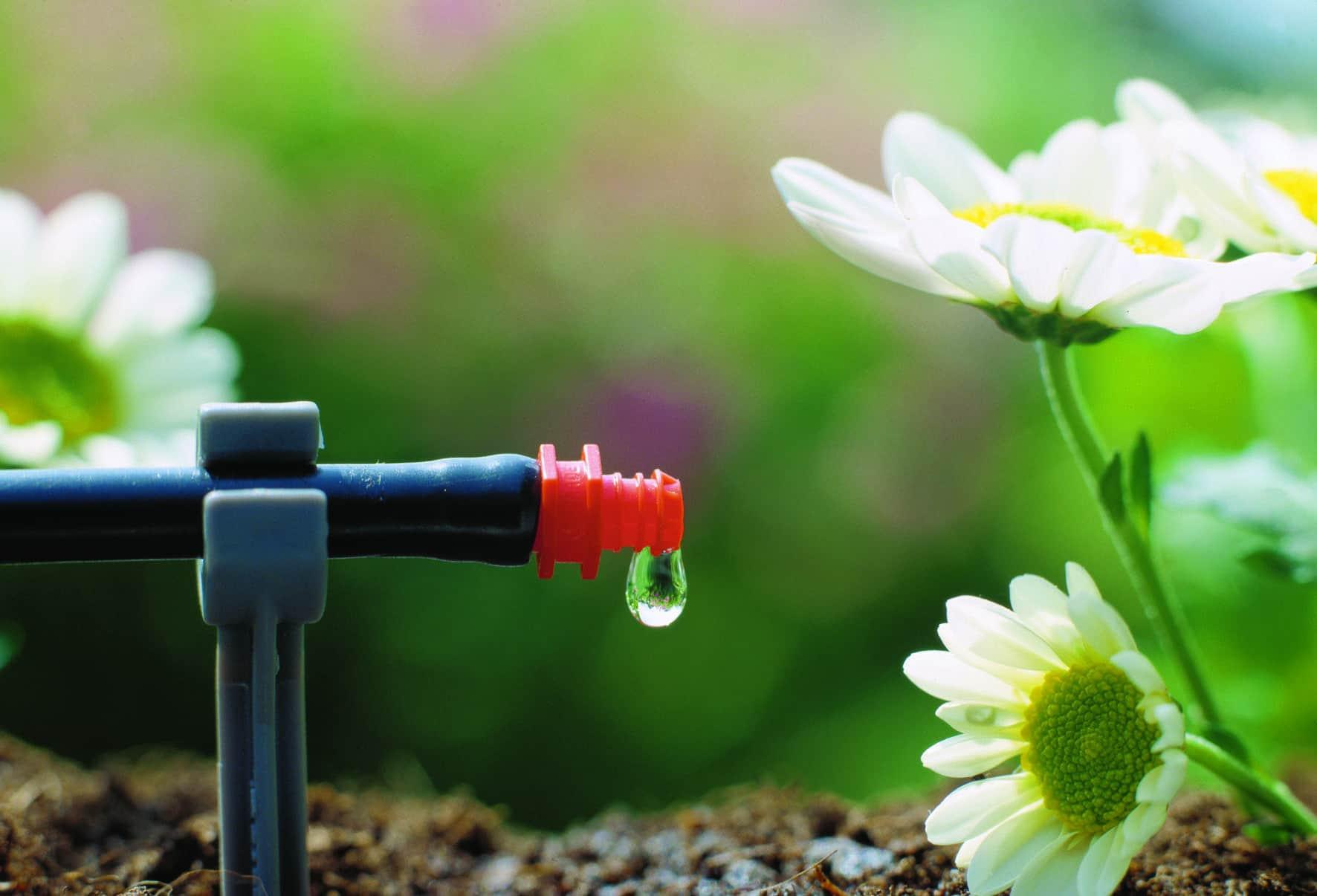 Капельные системы полива