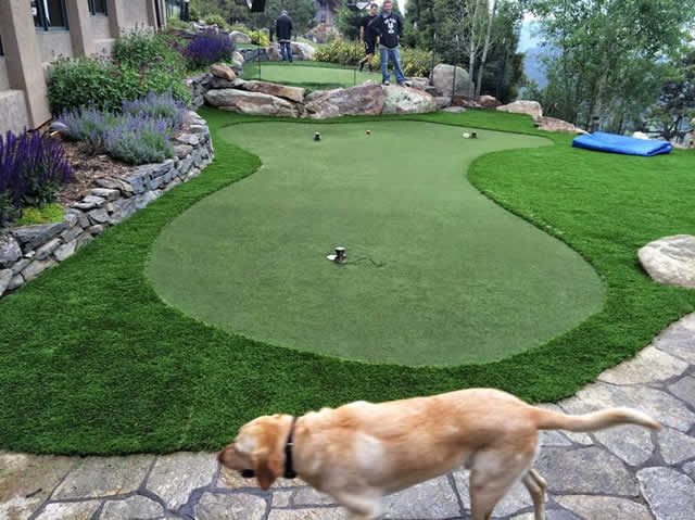 Happy Dog on New Lawn Pros Landscaping Project